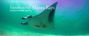 Marine Mega Fauna