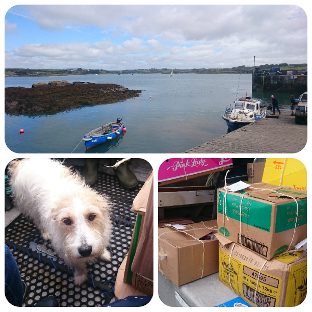 View from Cunnamore Pier, West Cork. On board the MV Thresher. A cute doggie making the boat trip with us.